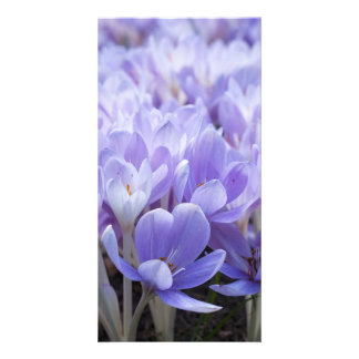 Crocus Photo Card