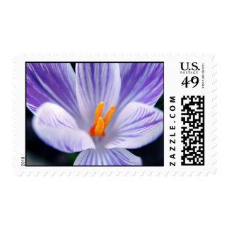 crocus stamps