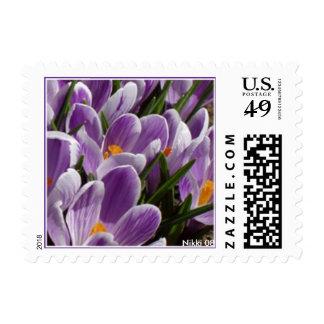 Crocus Postage Stamp