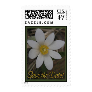 "Crocus. ""Save the Date"" Postage"