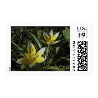 Crocus. Save the Date. Postage