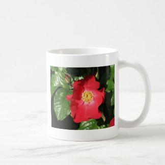 Crocus Shrub Rose 223 Mugs