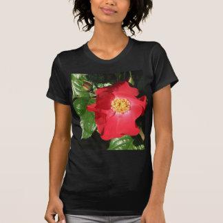Crocus Shrub Rose 223 T-Shirt