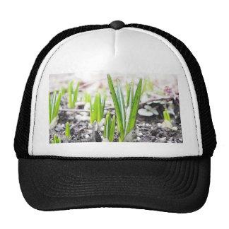 Crocus Sprouts In The Spring Garden Trucker Hats