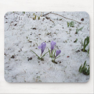 Crocuses in Snow Mouse Pad