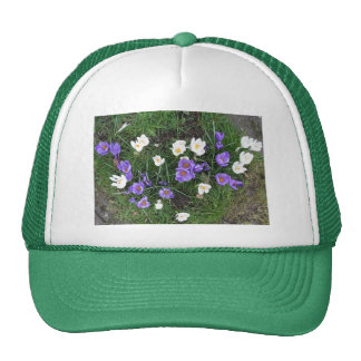 Crocuses Trucker Hat