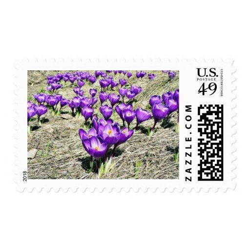 Crokus Crokus Vern Postage Stamp
