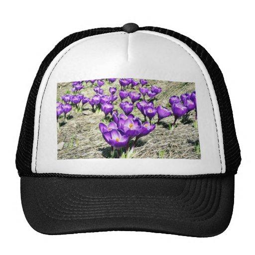 Crokus Crokus Vern Trucker Hat