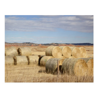 Crook County, Hay Bales 2 Postcard