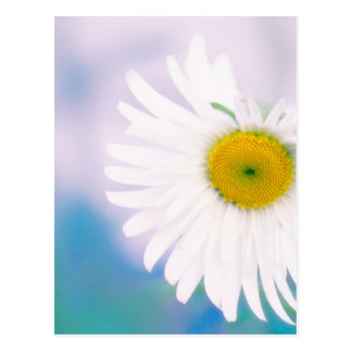 Crooked Daisy Postcard