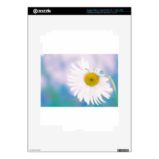 Crooked Daisy Skin For iPad 3