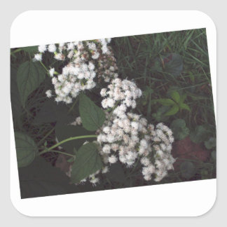Crooked Flowers Square Sticker