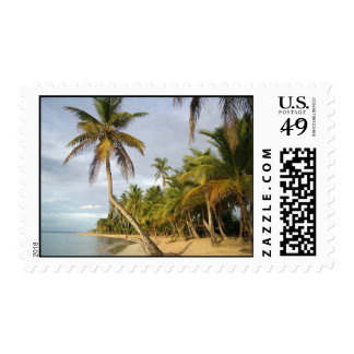 Crooked Palm Postage Stamp