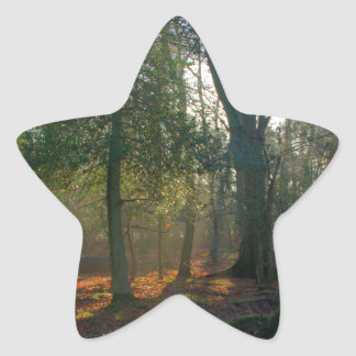 Crooked Tree and River Star Stickers