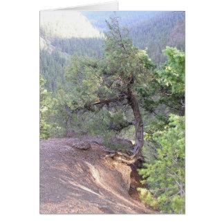 Crooked Tree Card