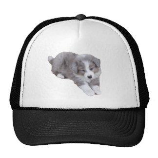 croppedimageofpup hat
