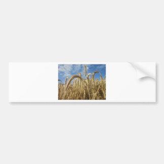 Crops of Cereals and Summer Sky Car Bumper Sticker
