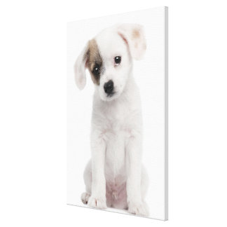 Cross breed puppy (2 months old) canvas print