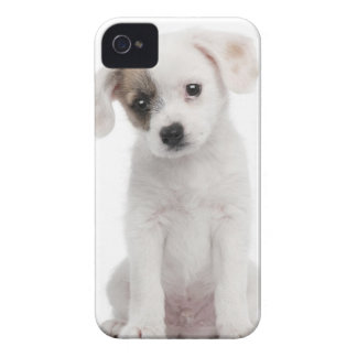 Cross breed puppy (2 months old) iPhone 4 case