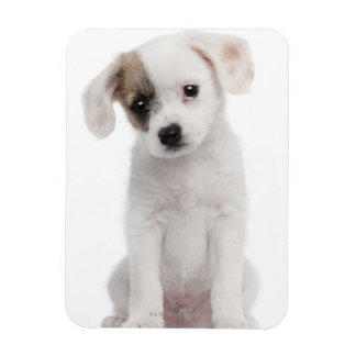 Cross breed puppy (2 months old) magnet
