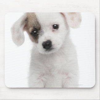 Cross breed puppy (2 months old) mouse pad