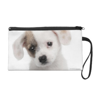 Cross breed puppy (2 months old) wristlet