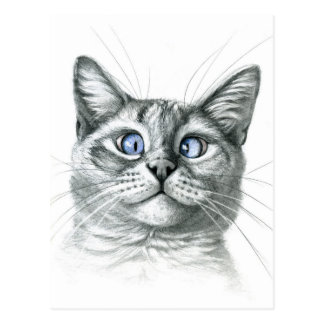 Cross-country race Eyed cat G122 Postcard