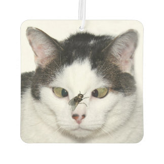 Cross eyed cat and fly air freshener