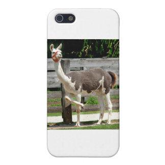Cross-Legged Llama iPhone Case