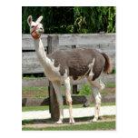 Cross-Legged Llama Postcard
