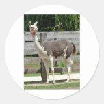 Cross-Legged Llama Sticker