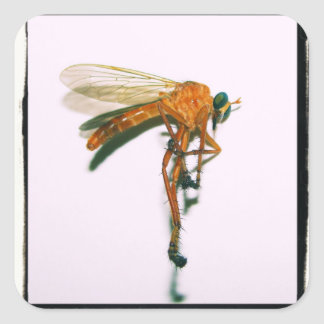 Cross Process Macro Robber Fly by KLM Square Sticker