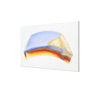 Cross section illustration of formation of canvas print