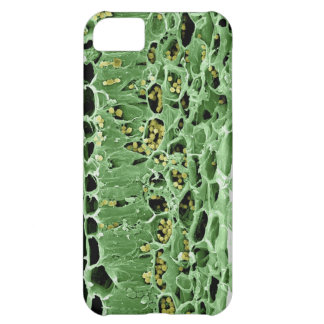 Cross Section of Leaf Cover For iPhone 5C