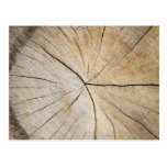 Cross section of tree trunk postcard