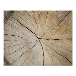 Cross section of tree trunk poster