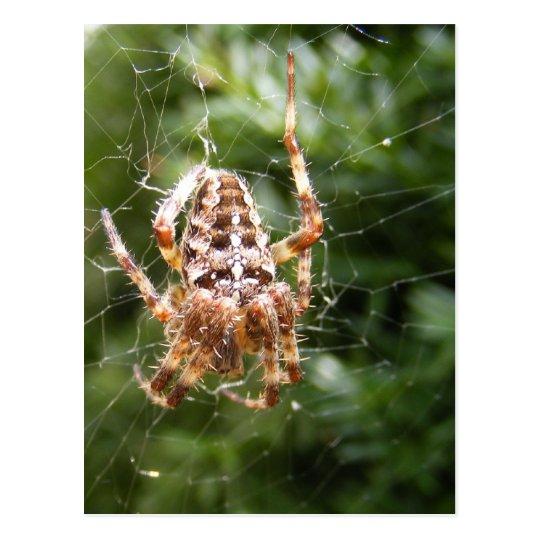 Cross Spider 132 ~ postcard