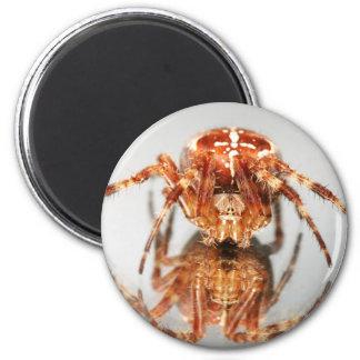 Cross spider on a mirror fridge magnets