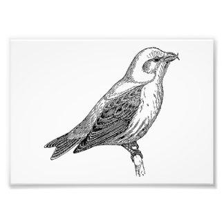 Crossbill Bird Art Photographic Print