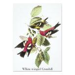 Crossbill Blanco-con alas - John James Audubon Invitación 12,7 X 17,8 Cm