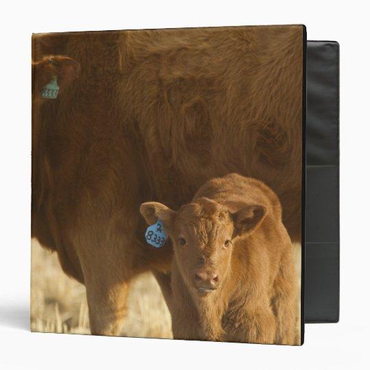 Crossbred cow with calf near Choteau, Montana, 3 Ring Binder