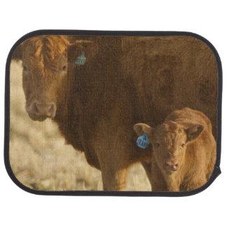 Crossbred cow with calf near Choteau, Montana, Car Mat