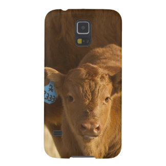 Crossbred cow with calf near Choteau, Montana, Galaxy S5 Covers