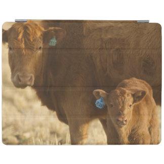 Crossbred cow with calf near Choteau, Montana, iPad Cover