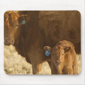 Crossbred cow with calf near Choteau, Montana, Mouse Pad