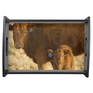 Crossbred cow with calf near Choteau, Montana, Serving Tray
