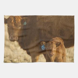 Crossbred cow with calf near Choteau, Montana, Towels