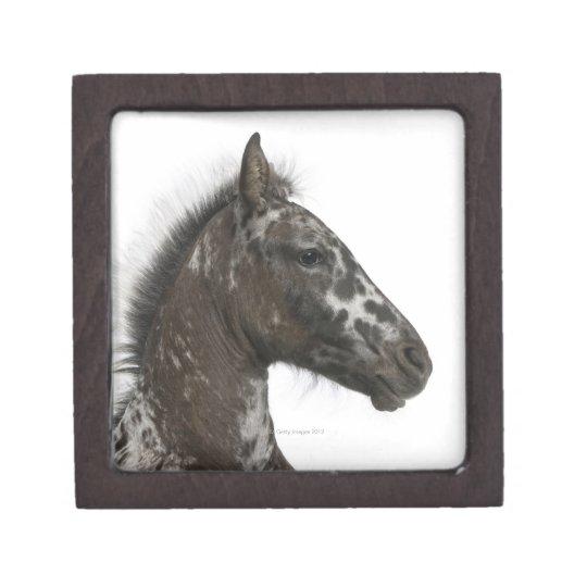 crossbreed Foal between a Appaloosa and a Jewelry Box