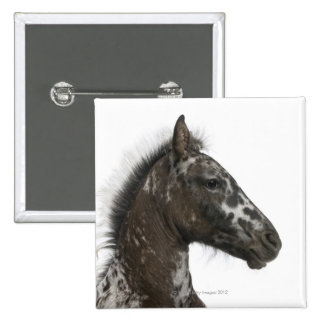crossbreed Foal between a Appaloosa and a Pinback Button