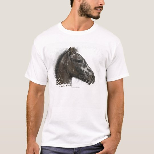 crossbreed Foal between a Appaloosa and a T-Shirt